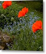 Poppy Foursome Metal Print