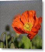 Poppy - Id 16235-142806-2801 Metal Print