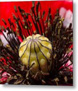 10092 Poppy Love #01 Metal Print