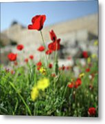 Red Poppy Flower On The Meadow Metal Print