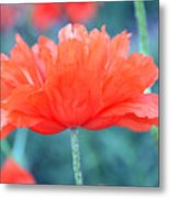 Poppy Profile Metal Print