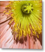 Poppy Whorls 2 Metal Print
