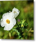 Poppy Wildflower Metal Print