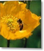 Poppy With Bee Friend Metal Print