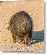 Porcupine Walking Metal Print