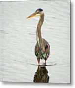 Port Townsend Blue Heron Metal Print