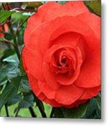 Portland Rose Garden Metal Print