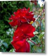 Portland Roses #6 Metal Print