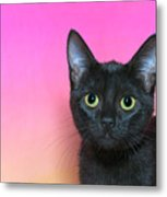 Portrait Of A Black Kitten Metal Print