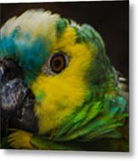 Portrait Of A Blue-fronted Parrot Metal Print