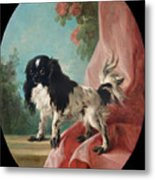 Portrait Of A Cavalier King Charles Spaniel Metal Print