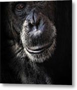 Portrait Of A Chimpanzee Metal Print