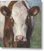 Portrait Of A Cow Iv Metal Print