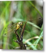 Portrait Of A Dragonfly Metal Print