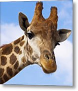 Portrait Of A Giraffe On The Background Of Blue Sky. Metal Print
