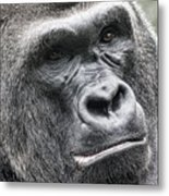 Portrait Of A Gorilla Metal Print