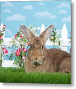 Portrait Of A Gregarious Brown Bunny Metal Print