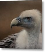 Portrait Of A Griffon Vulture Metal Print