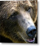 Portrait Of A Grizzly Metal Print