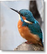 Portrait Of A Kingfisher Metal Print