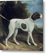 Portrait Of A Liver And White Pointer Metal Print by George Garrard