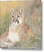 Portrait Of A Mountain Lion Metal Print