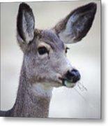 Portrait Of A Mule Deer Metal Print