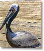 Portrait Of A Pelican Metal Print