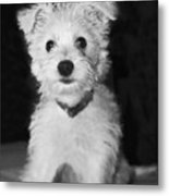 Portrait Of A Puppy In Black And White Metal Print