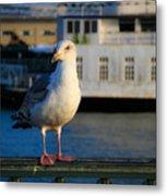 Portrait Of A Seagull Metal Print