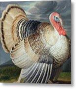 Portrait Of A Turkey  Metal Print