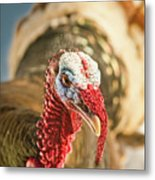 Portrait Of A Wild Turkey Metal Print