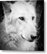 Portrait Of A Wolf Metal Print