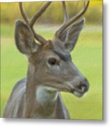 Portrait Of A Young Buck Metal Print