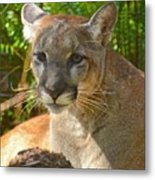 Portrait Of A Young Florida Panther Metal Print