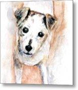 Portrait Of Abby - Jack Russell Terrier Metal Print