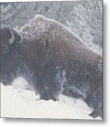 Portrait Of An American Bison Metal Print