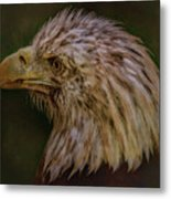 Portrait Of An Eagle Metal Print