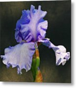 Portrait Of An Iris Metal Print