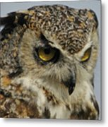 Portrait Of An Owl.  Metal Print