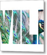 Portrait Of Beautiful Peacock With Open Tail Metal Print