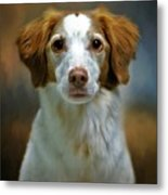 Portrait Of Gracie Metal Print by Stephanie Calhoun