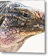Portrait Of Iguana Metal Print