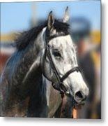 Portrait Of The Grey Race Horse Metal Print