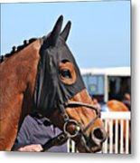 Portrait Of The Horse In The Hood Metal Print