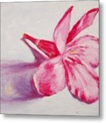 Portrait Of The Kaneri Flower. Oleander Metal Print
