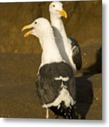 Portrait Of Two Seagulls On A Beach Metal Print