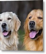 Portrait Of Two Young Beauty Dogs Metal Print