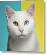 Portrait Of White Cat On Blue And Yellow Background Metal Print