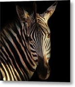 Portrait Of Zebra Metal Print